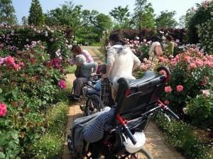花菜ガーデン-01